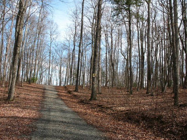 TBD Forest Green, Galax, VA 24333 (MLS #44877) :: Highlands Realty, Inc.