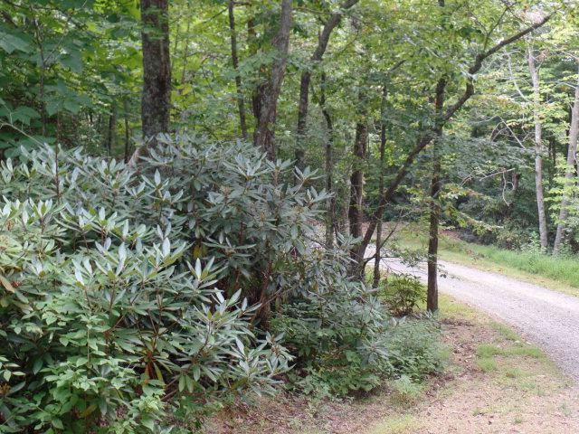 Lot 24 Rose Bay Ln., Fancy Gap, VA 24328 (MLS #64301) :: Highlands Realty, Inc.