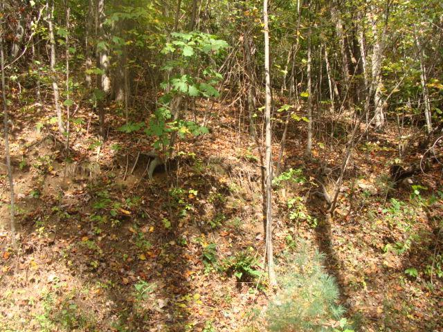 TBD Old Wagon Trail, Fancy Gap, VA 24328 (MLS #64379) :: Highlands Realty, Inc.
