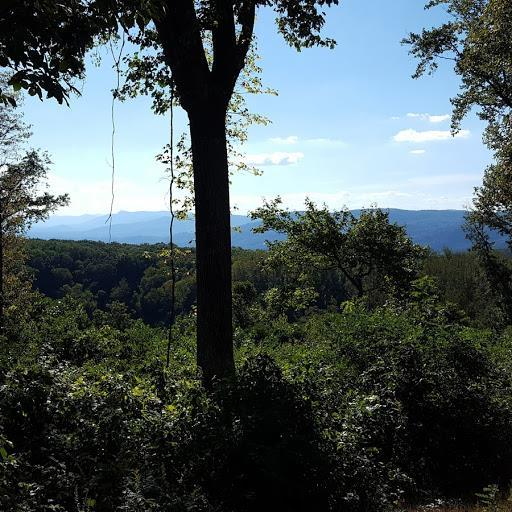 TBD Willis Gap Mountain Rd, Fancy Gap, VA 24328 (MLS #65050) :: Highlands Realty, Inc.