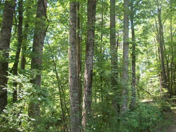 TBD Abram Penn Hwy, Critz, VA 24082 (MLS #67858) :: Highlands Realty, Inc.
