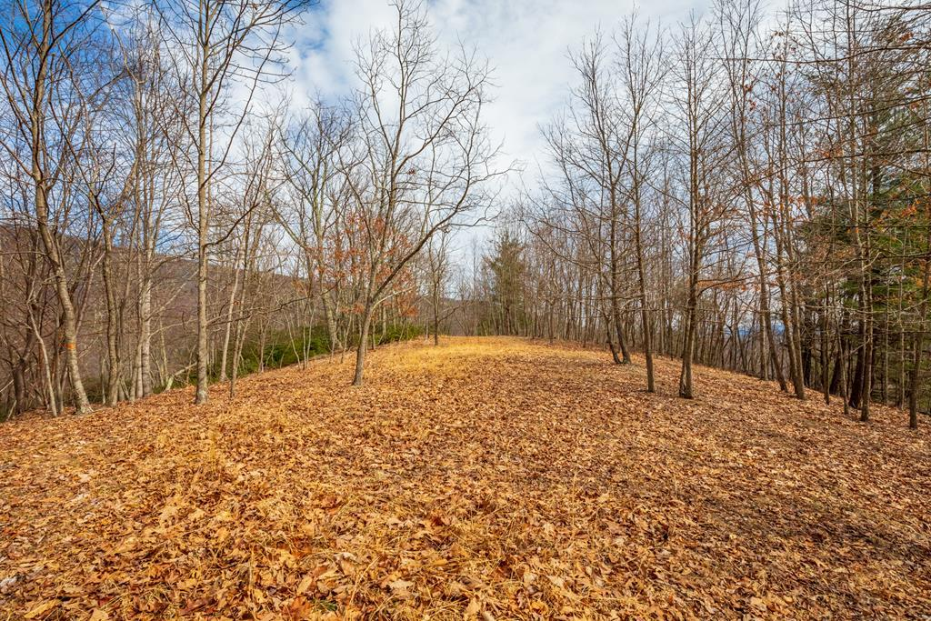 10.8 ac Forest Trail - Photo 1