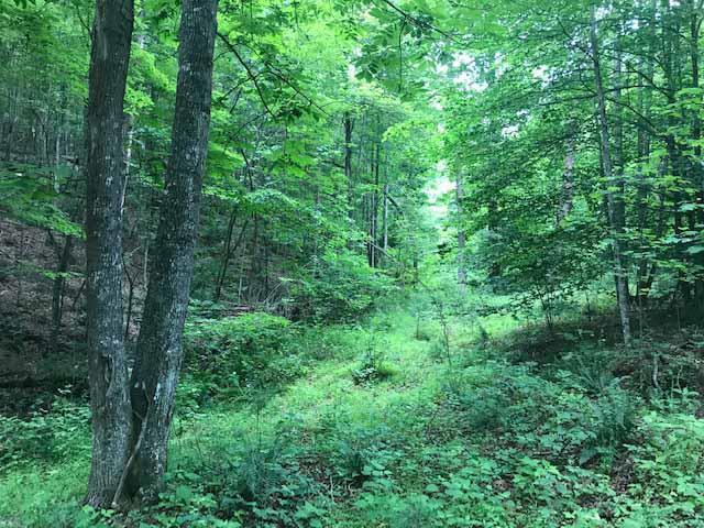 TBD Pridemoore Rd, Galax, VA 24333 (MLS #70106) :: Highlands Realty, Inc.