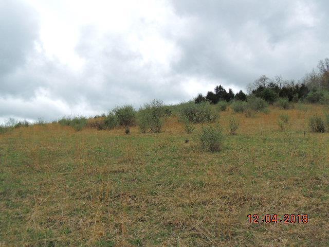 TBD Chestnut Tower Lane, Max Meadows, VA 24360 (MLS #70758) :: Highlands Realty, Inc.