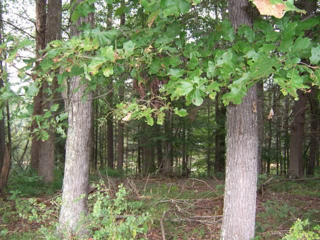 0 Lake Pointe Drive, Lots 4 & 4A - Photo 1