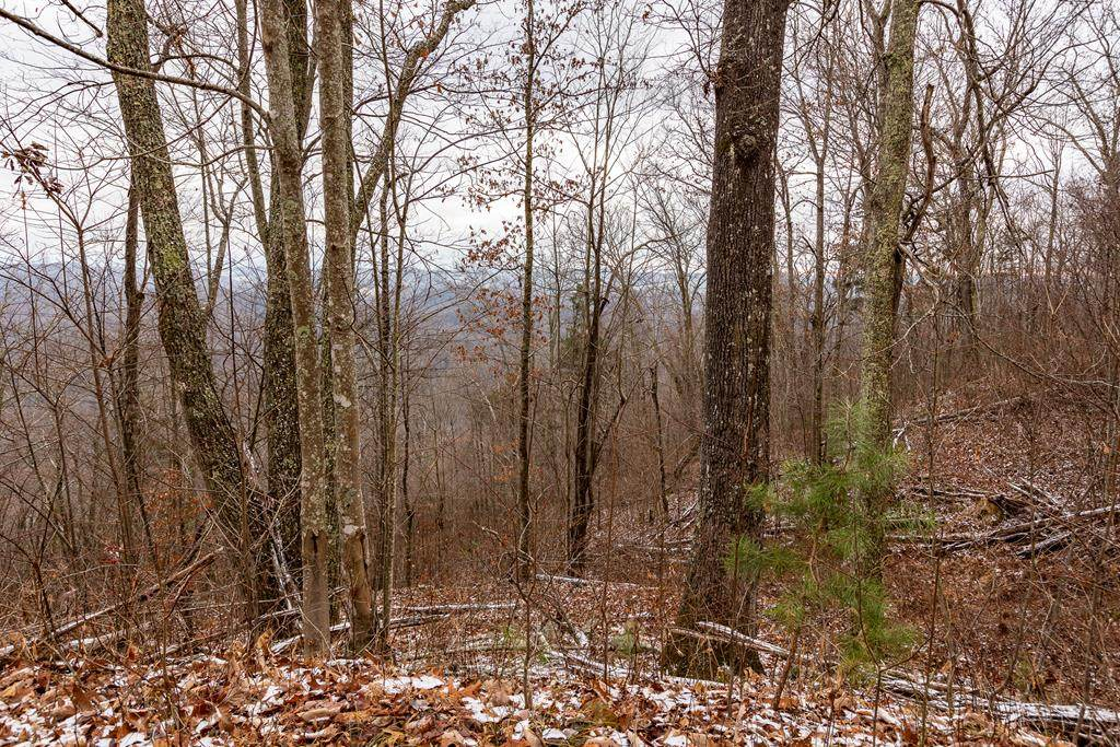 23.53 AC North Fork River Rd - Photo 1