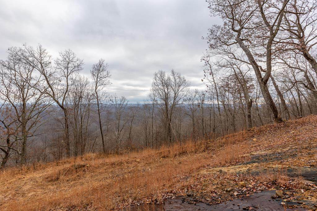 7 AC North Fork River Rd - Photo 1
