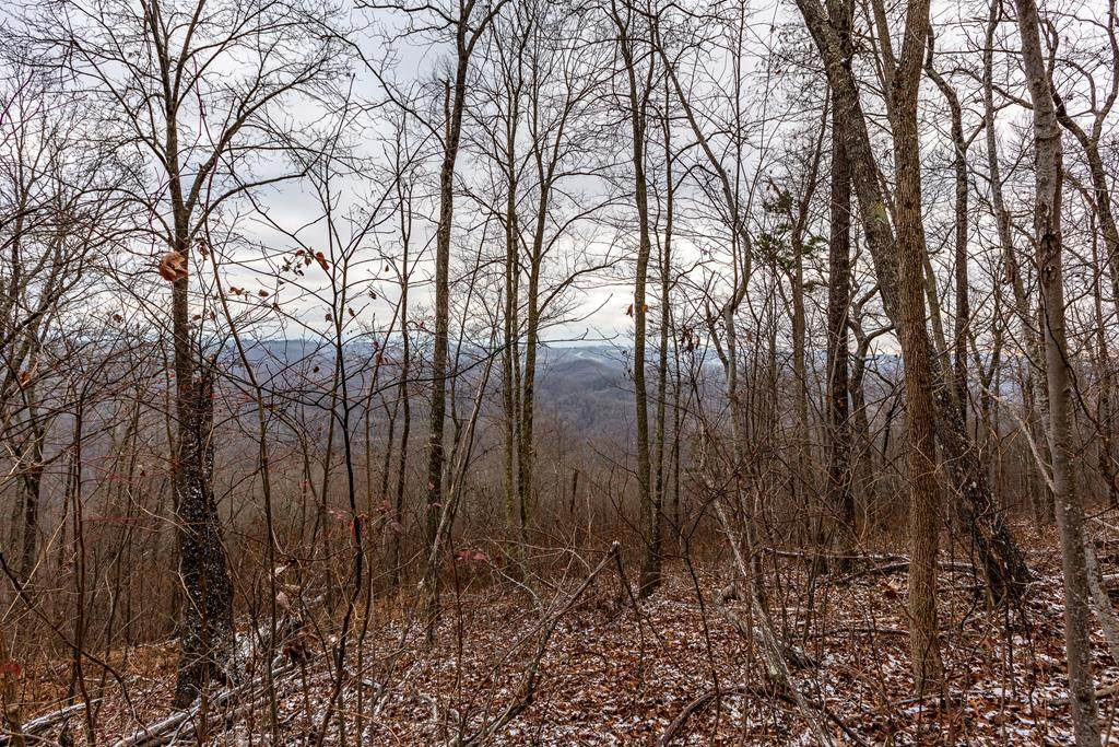 43 AC North Fork River Rd - Photo 1