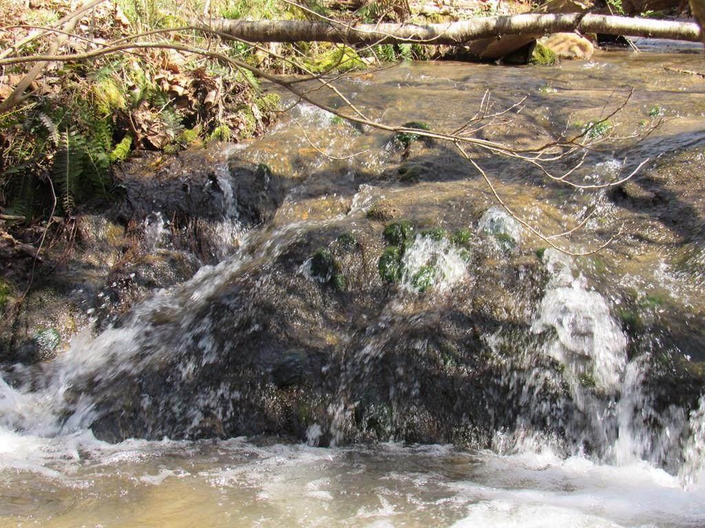 128 Johnson Creek - Photo 1