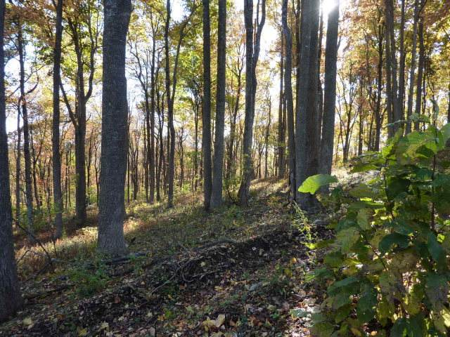 TBD Bent Road, Meadows of Dan, VA 24120 (MLS #78007) :: Highlands Realty, Inc.