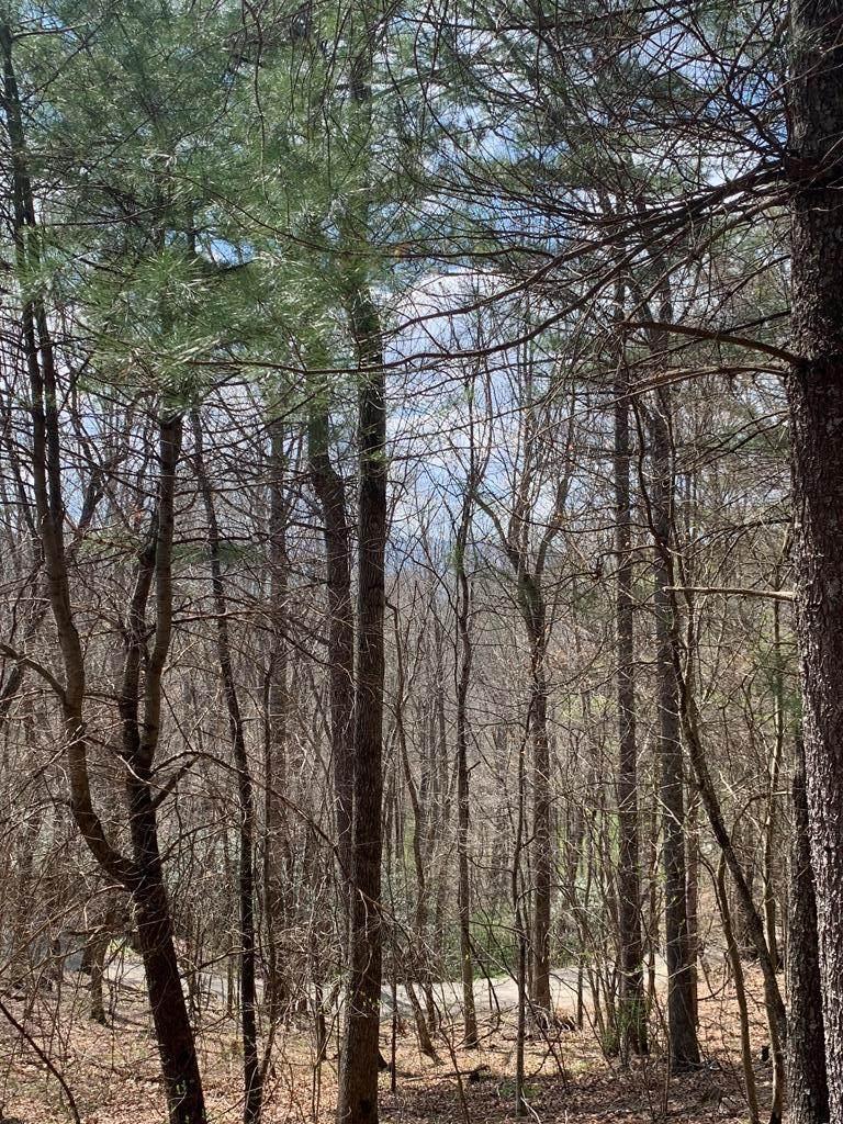 TBD Pine Branch Rd. - Photo 1