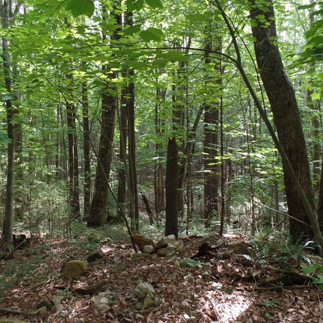 000 Gobbler Lane, Chilhowie, VA 24319 (MLS #60629) :: Highlands Realty, Inc.
