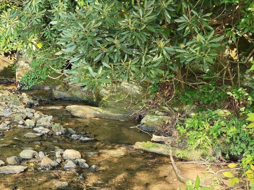 TBD Johns Creek Ln - Photo 1