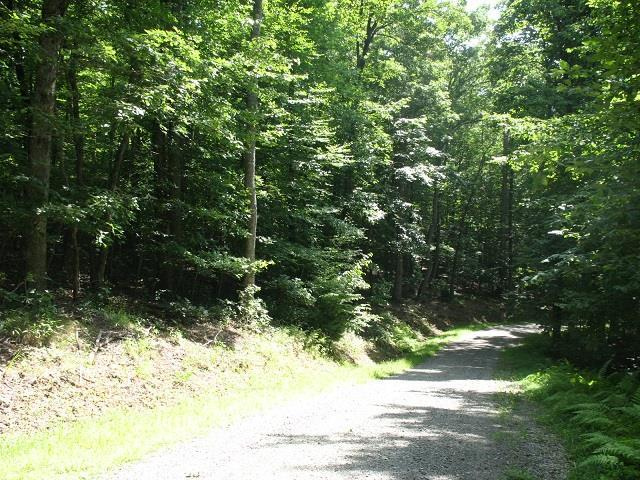TBD Forest Green, Galax, VA 24333 (MLS #65971) :: Highlands Realty, Inc.