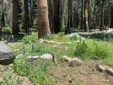 21164 Donner Pass Road - Photo 7