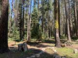 21164 Donner Pass Road - Photo 9