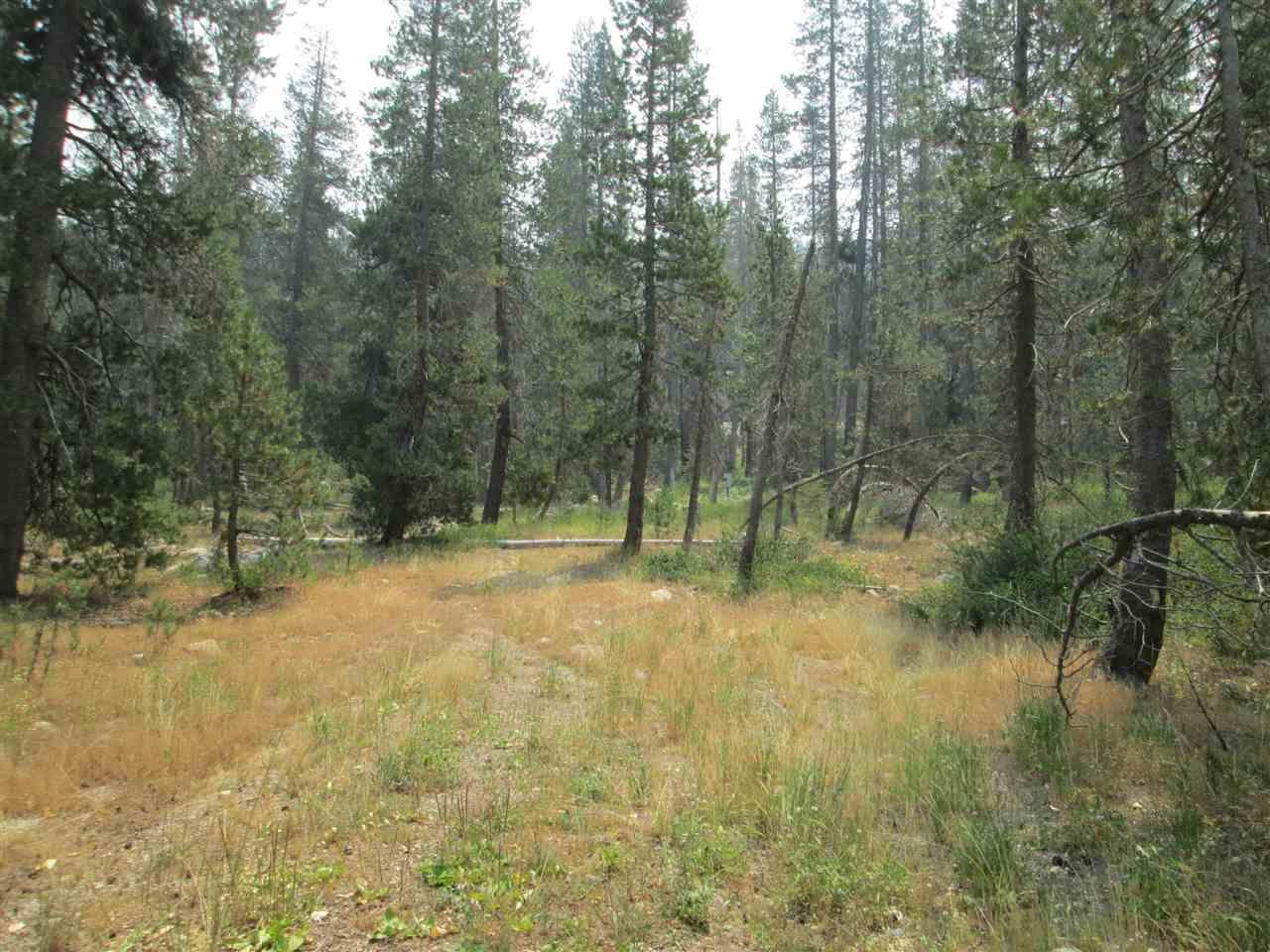 51337 Donner Pass Road - Photo 1