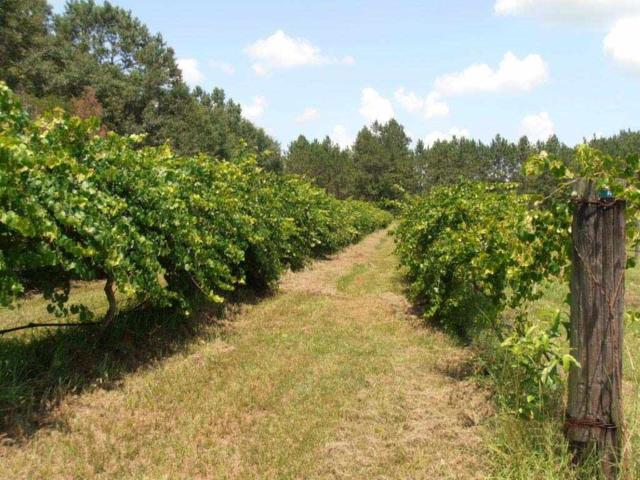 1211 Waukeenah, Monticello, FL 32345 (MLS #270984) :: Berkshire Hathaway HomeServices Beach Properties of Florida