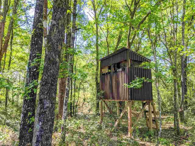 - Natural Bridge Trail, Woodville, FL 32305 (MLS #331560) :: Team Goldband
