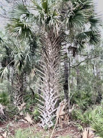 Lot 24 Carrol Drive, Crawfordville, FL 32327 (MLS #337482) :: Danielle Andrews Real Estate