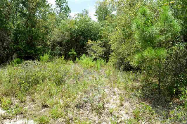 000 Ocean Pond Drive, Perry, FL 32348 (MLS #323023) :: Team Goldband