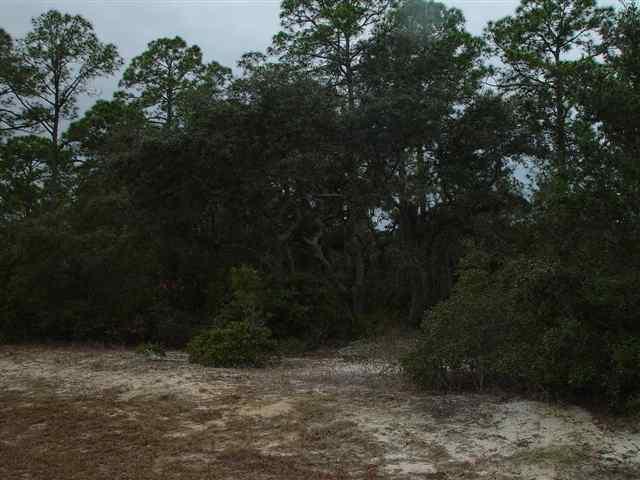 1258 Alligator, Alligator Point, FL 32346 (MLS #274170) :: Best Move Home Sales