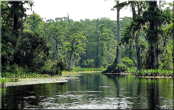 S Egret, Crawfordville, FL 32327 (MLS #292518) :: Best Move Home Sales