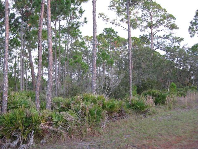 35 Turtle Creek, Ochlockonee Bay, FL 32346 (MLS #294217) :: Best Move Home Sales