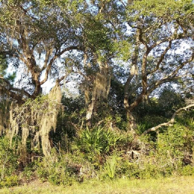Mashes Sands, Ochlockonee Bay, FL 32346 (MLS #298784) :: Best Move Home Sales