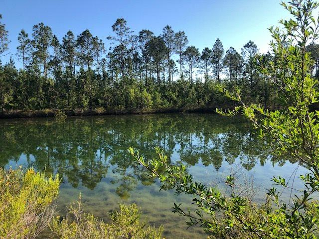 000 SW County Rd 22, Sumatra, FL 32321 (MLS #306718) :: Best Move Home Sales