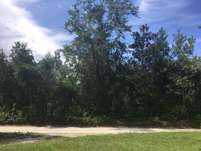 XX Guy Strickland, Crawfordville, FL 32327 (MLS #308666) :: Best Move Home Sales