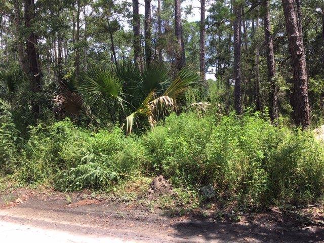 73 River, Panacea, FL 32346 (MLS #309870) :: Best Move Home Sales