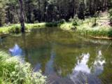 194 Acres Black Lake - Photo 1