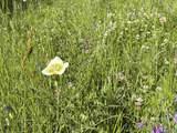 Lot 188 Meadow Glen - Photo 10