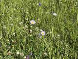 Lot 188 Meadow Glen - Photo 9