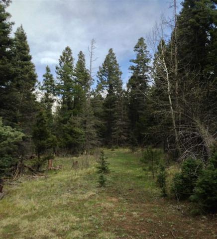 Lot 8 Green Valley, Black Lake, NM 87710 (MLS #100202) :: The Power of Teamwork Group