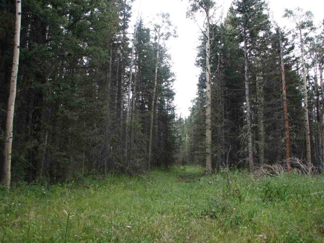 Lot 16 Hinz Drive, Black Lake, NM 87710 (MLS #100318) :: Page Sullivan Group | Coldwell Banker Mountain Properties