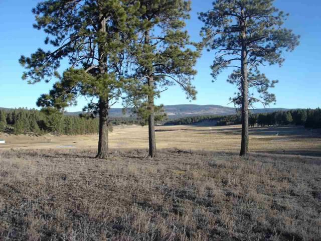 * Osha Road, Black Lake, NM 87114 (MLS #101120) :: The Chisum Group