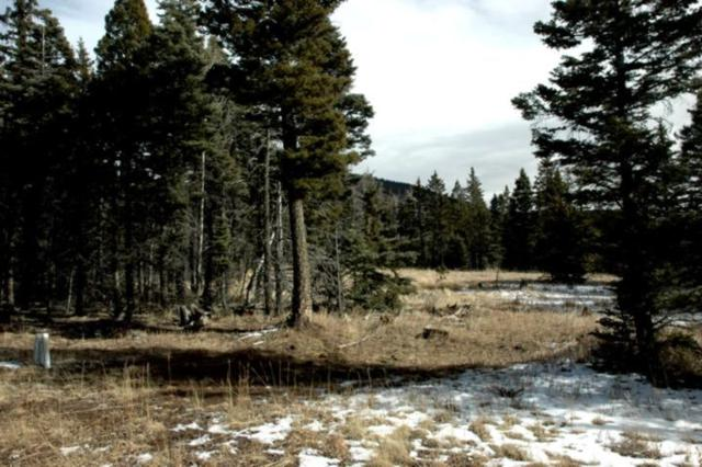 Lot 184 Spotted Owl, Angel Fire, NM 87710 (MLS #101199) :: Page Sullivan Group | Coldwell Banker Lota Realty