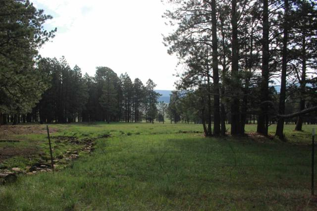 TBD Mlk, Black Lake, NM 87710 (MLS #102173) :: The Chisum Realty Group