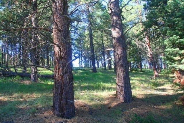 Lot 1311 Brazos, Angel Fire, NM 87710 (MLS #102391) :: Angel Fire Real Estate & Land Co.
