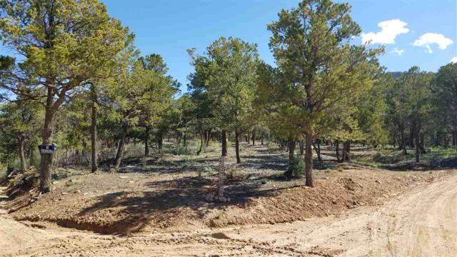 263 Gallina Canyon Road, Valdez, NM 87514 (MLS #103359) :: Page Sullivan Group | Coldwell Banker Mountain Properties