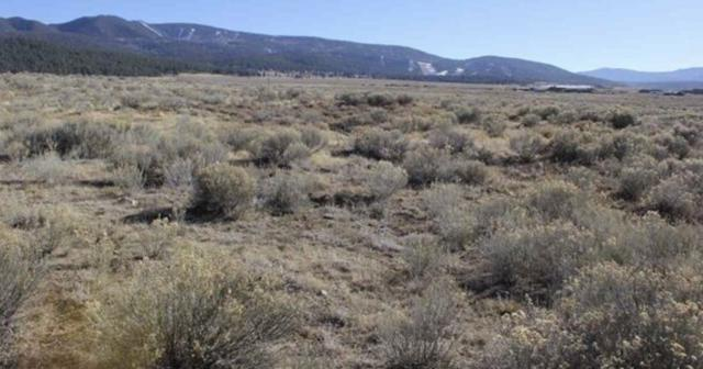 TBD Darrell F Benjamin, Angel Fire, NM 87710 (MLS #103711) :: The Chisum Realty Group
