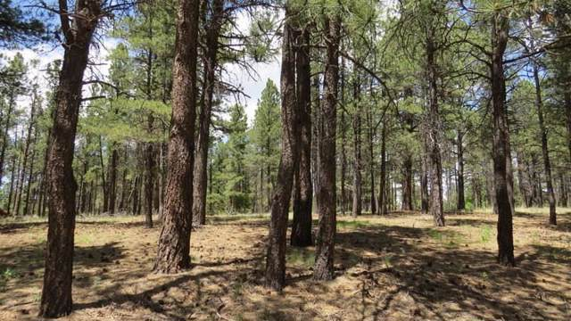 Lot 2 Halo Pines Terrace, Angel Fire, NM 87710 (MLS #104010) :: Page Sullivan Group | Coldwell Banker Mountain Properties