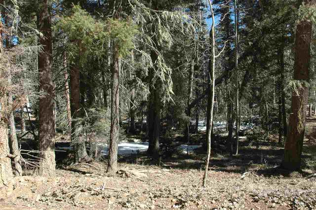 444 Rio Grande Tterrace, Angel Fire, NM 87710 (MLS #104913) :: The Chisum Realty Group