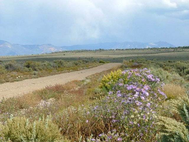 Lot 20 Cielito Azul, El Prado, NM 87529 (MLS #104923) :: The Chisum Realty Group
