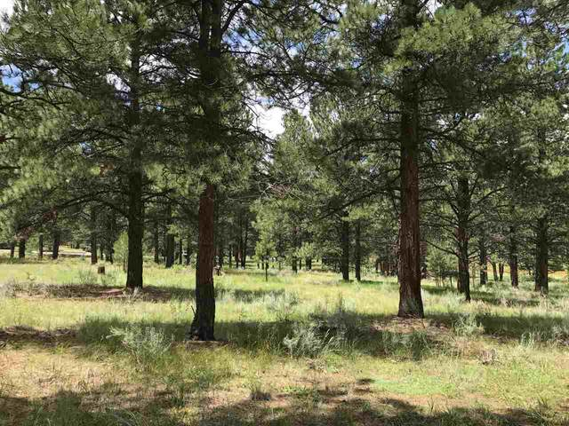 Lot 995 Montoya Terrace, Angel Fire, NM, NM 87710 (MLS #105193) :: Angel Fire Real Estate & Land Co.