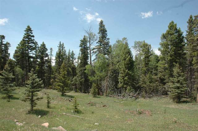 100 Elk Meadow, Angel Fire, NM 87710 (MLS #105230) :: Page Sullivan Group