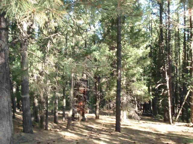 Lot 1472 Peralta Drive, Angel Fire, NM 87710 (MLS #105722) :: The Chisum Realty Group
