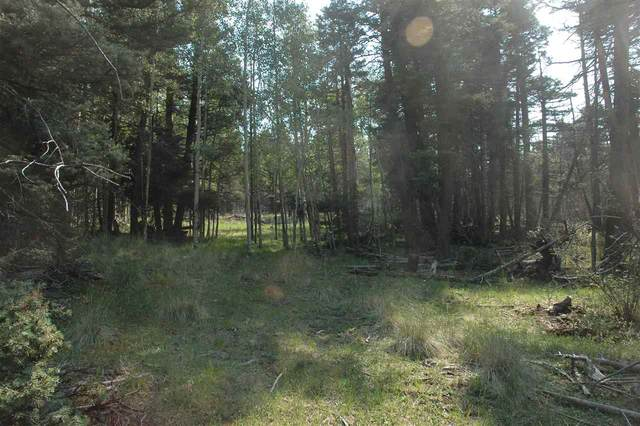 1467 Cheerful Way, Angel Fire, NM 87710 (MLS #105756) :: The Chisum Realty Group